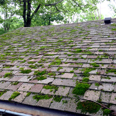 roofmoss09